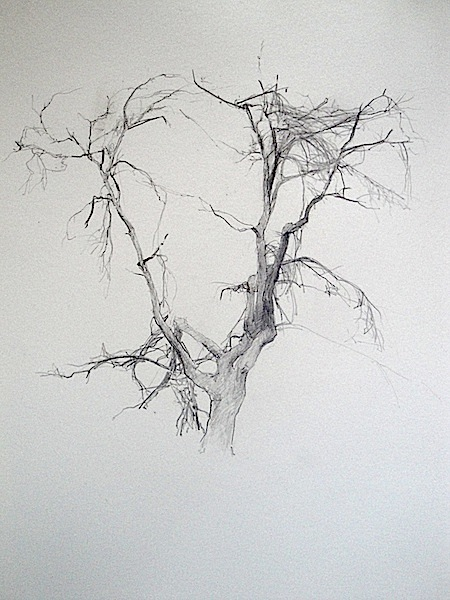 T. A. Lawson's tree sketch drawing